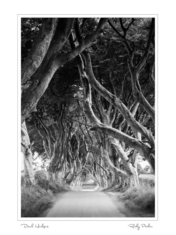 Dark Hedges BW by Ricky Parker Photography