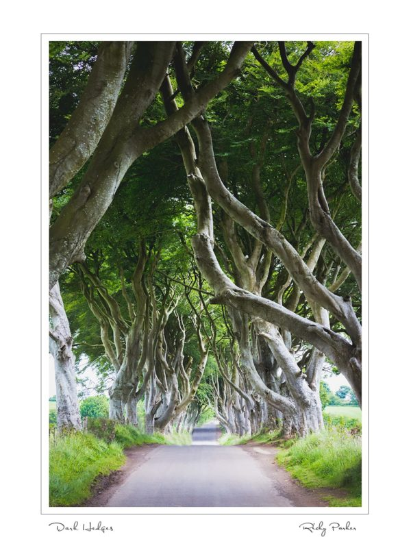 Dark Hedges by Ricky Parker Photography